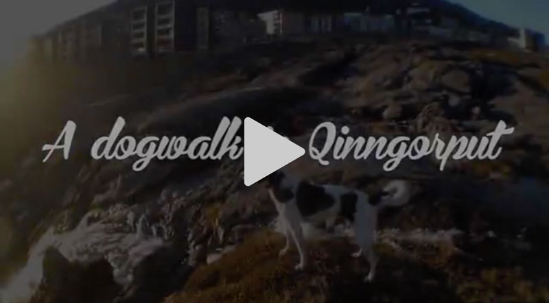 Hundetur iQinngorput