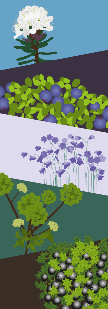 Kulukis dør-illustration planter